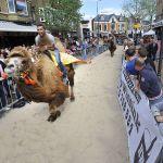 ApeldoornKamelenraces Caterplein/Beekpark.© Maarten Sprangh